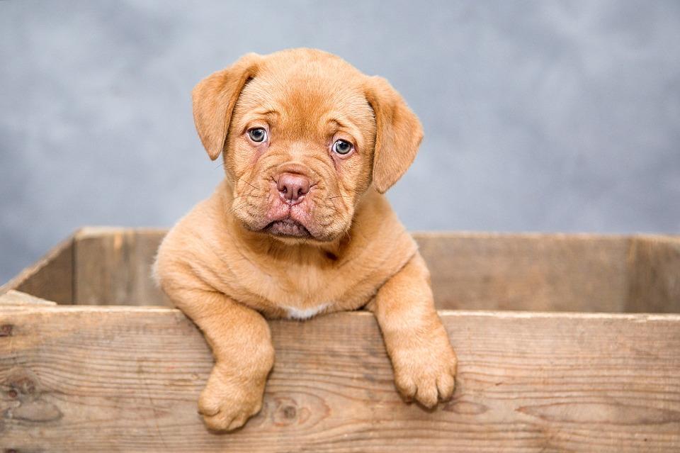 Disse ting bør du tænke over, inden du anskaffer dig en hund