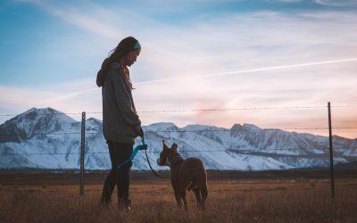 Giv din hund fri adgang til hus og have med hundelem
